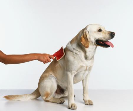 Using slicker brush on short-haired dog, side view